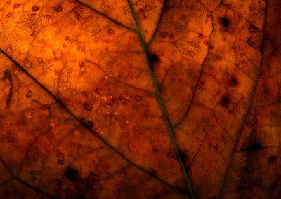 Leafmap
