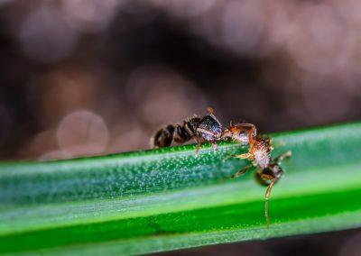 Ant War #2
