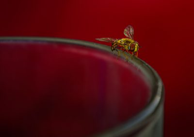 Hoverfly on Rim of Glass